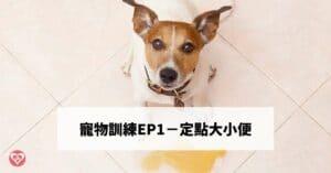 結合寵物尿布墊 7步驟訓練狗狗定點大小便-寵物訓練ep1
